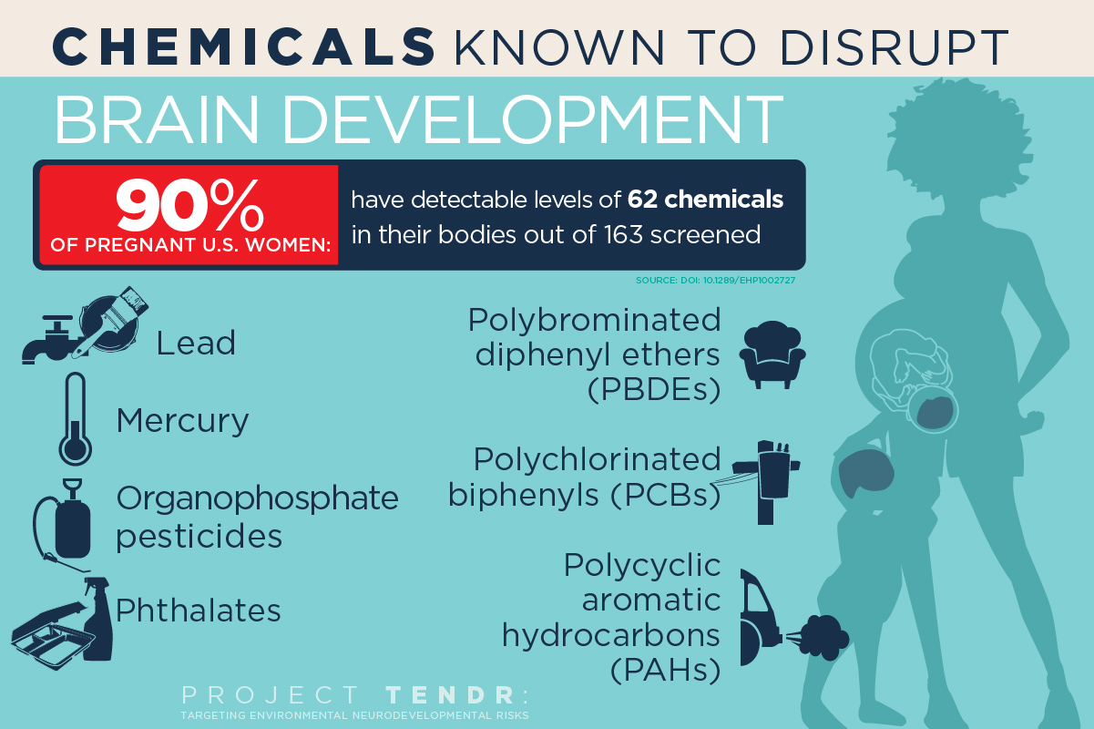 The Household Threat To Childrens Brains Brain Development >> These Common Chemicals Are A Danger To Your Child S Brain